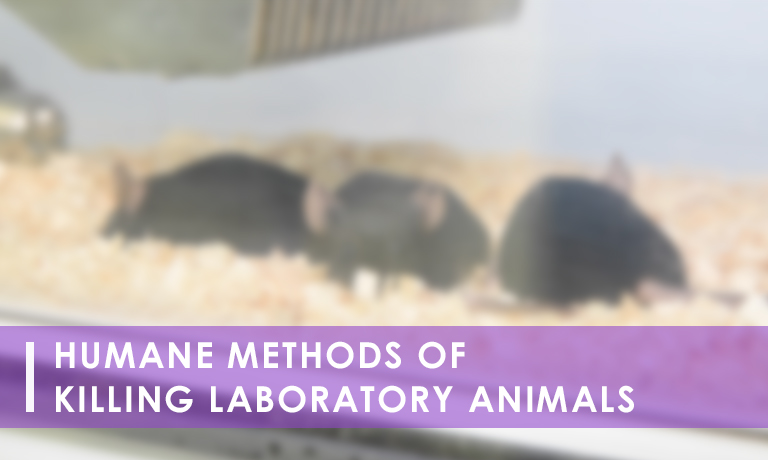 Link to Humane Methods of Killing Laboratory Animals eModule